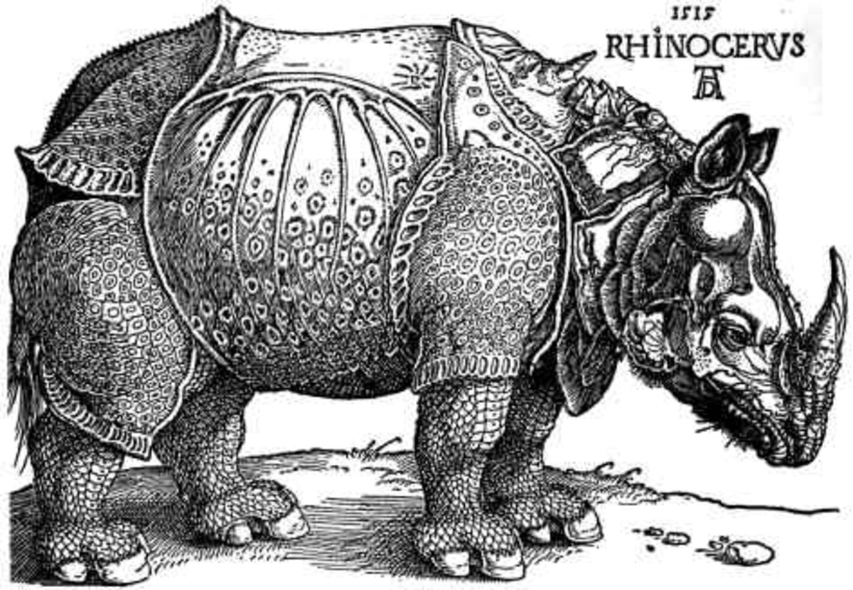 """Is the """"white ou"""" going the way of this image of the rhino? Rhinocerous by Albrecht Durer (1515). Image via Wikipedia"""