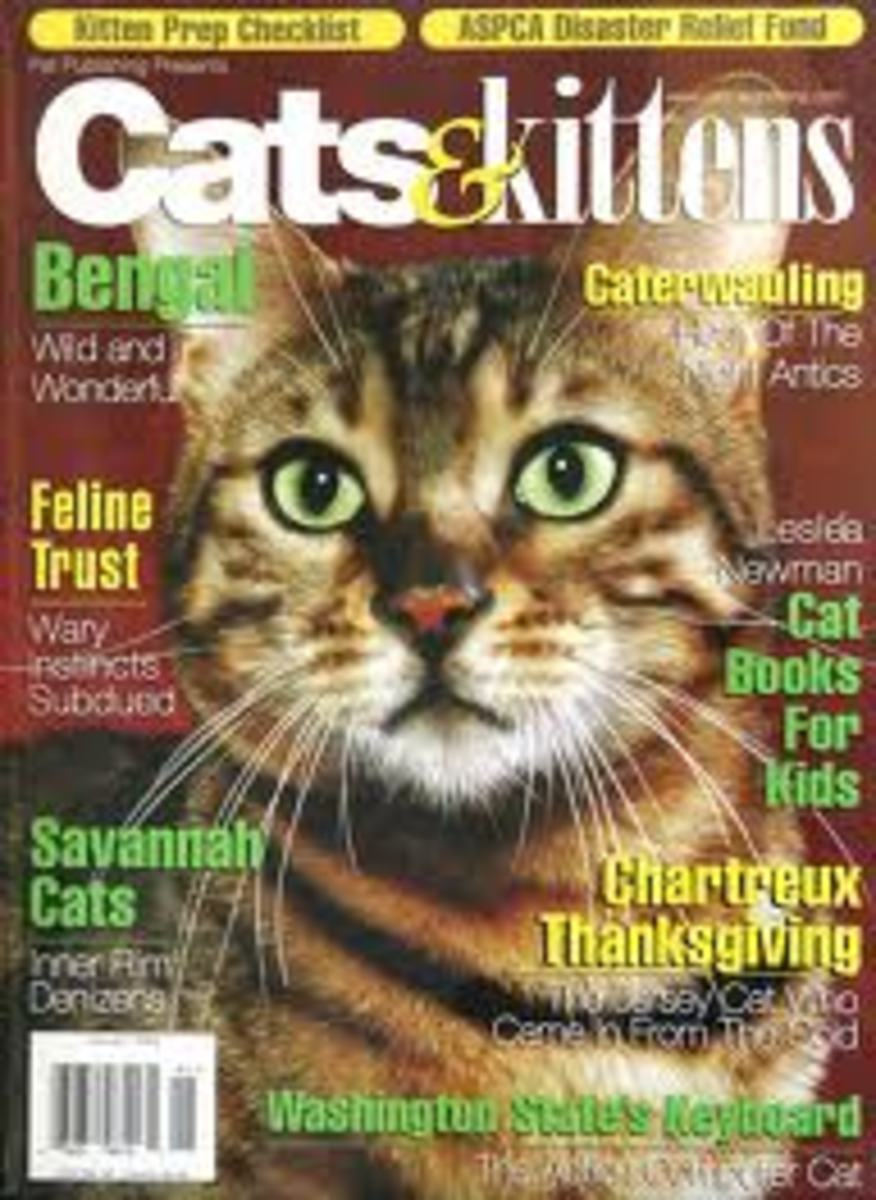 get-your-cat-story-published-in-a-magazine