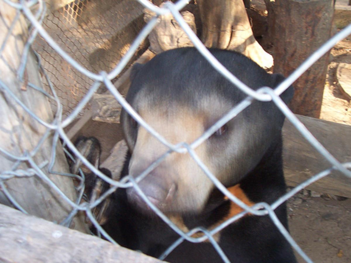 angkor-zoo