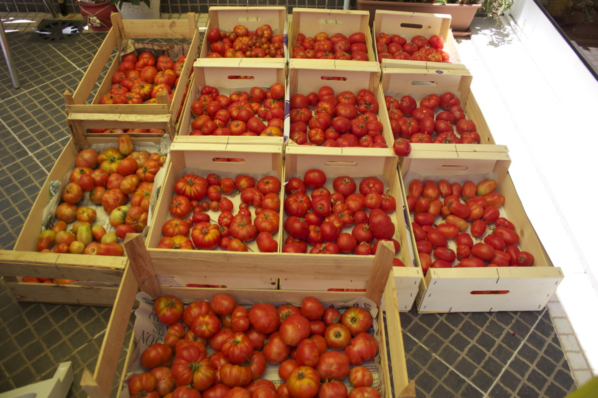 I have an abundance of fresh and fruity tomatoes