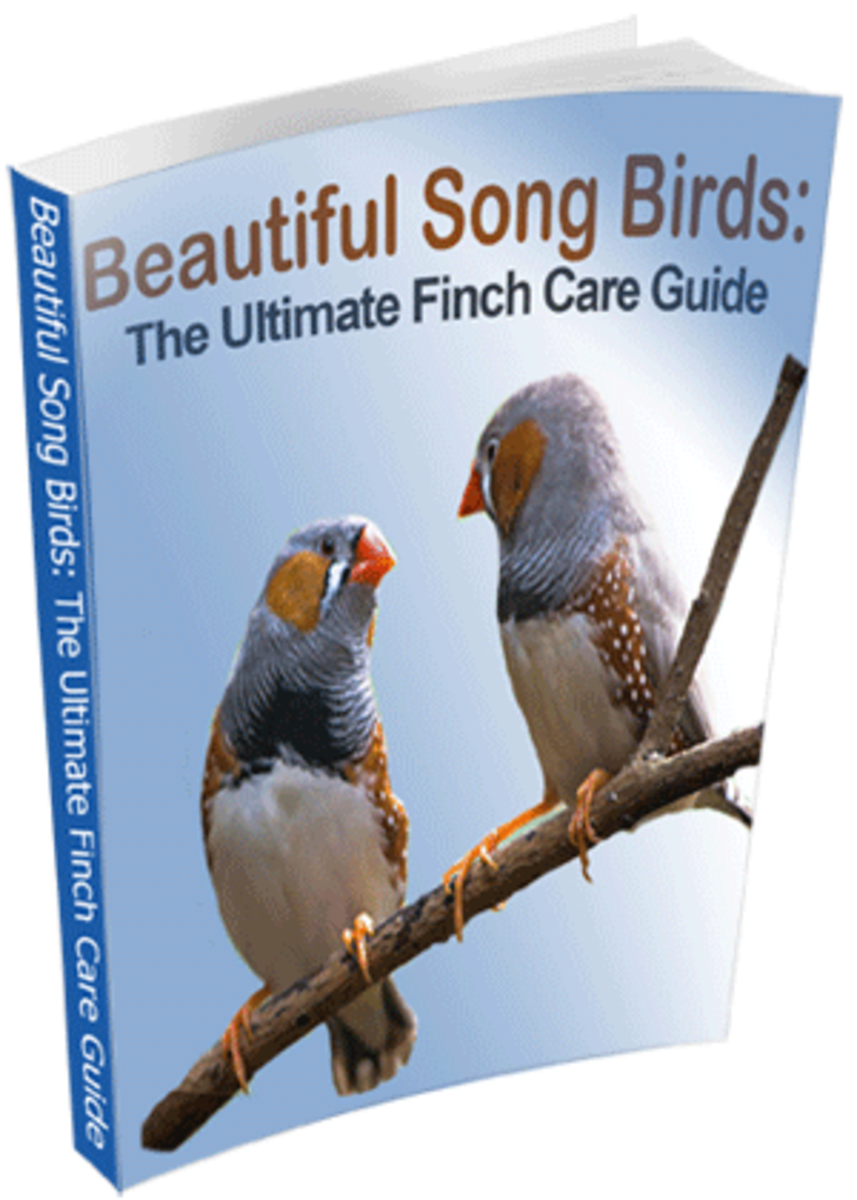 guide-to-finch-care.info