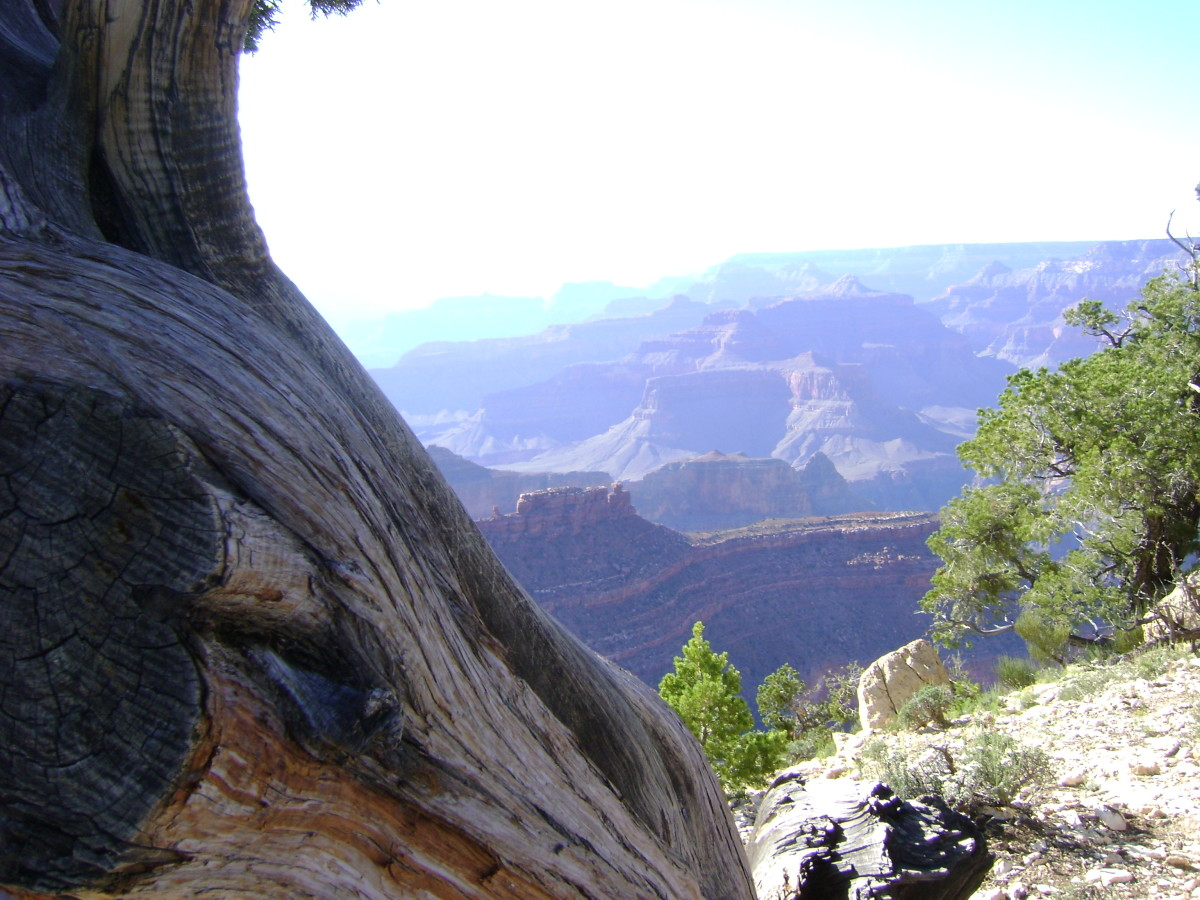 Your Trip to the Grand Canyon