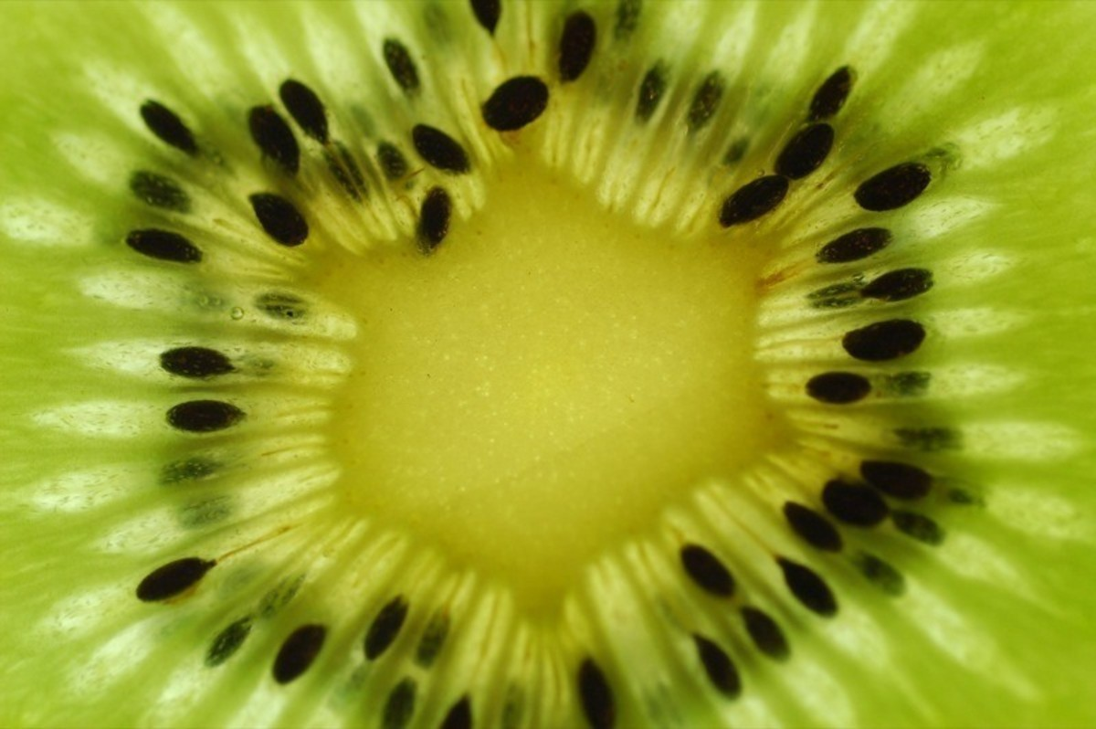Kiwi, great source of Vitamin C A Kiwi a day keeps scurvy away?