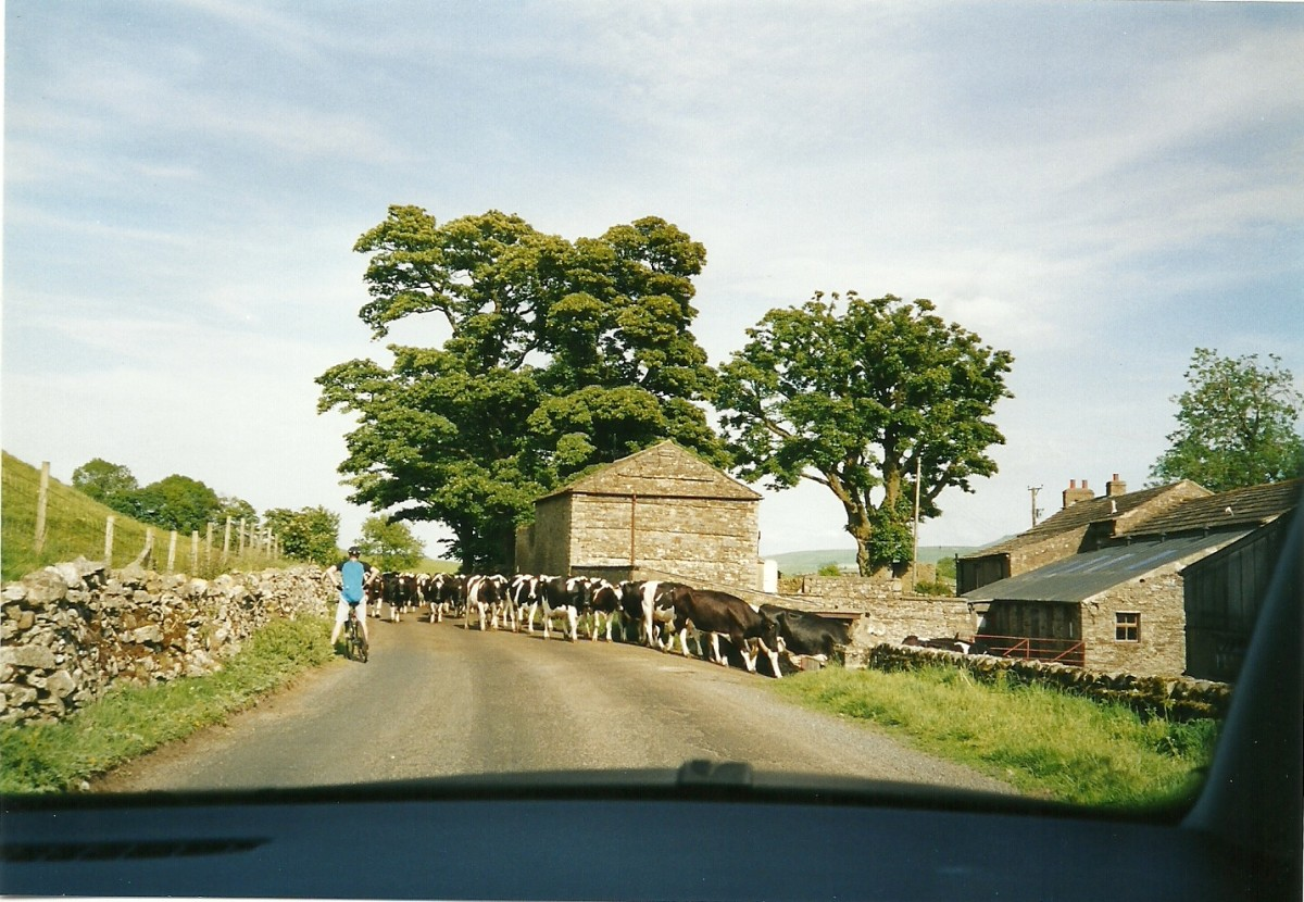 Traffic Jam in the Countryside of Ireland