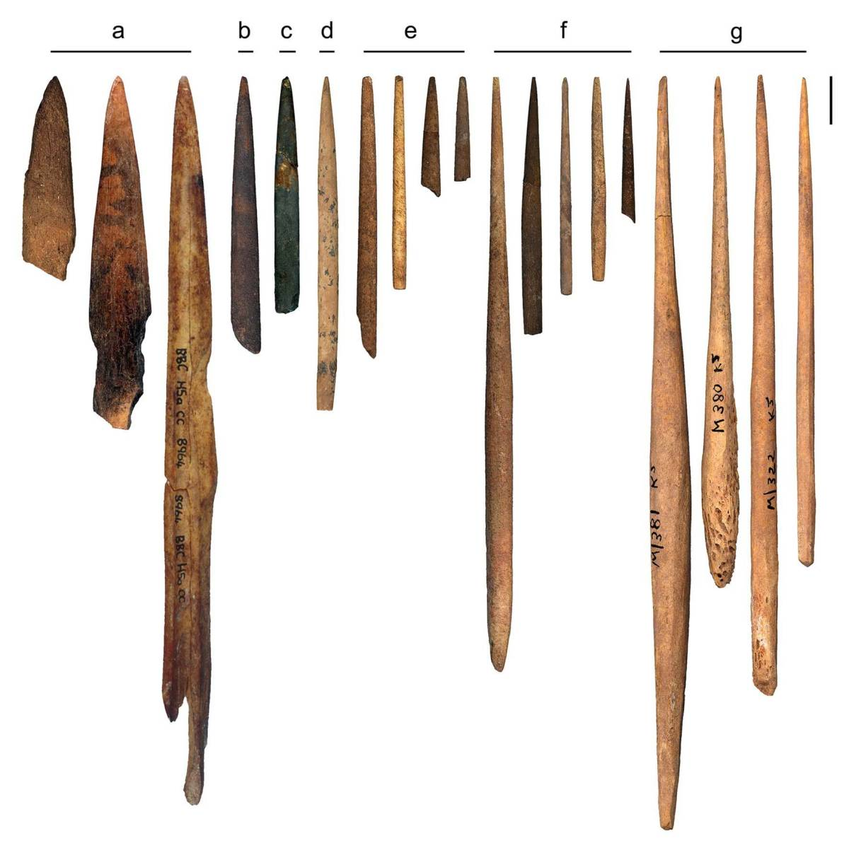 Bone points from various deposits at Early Modern Human sites in South Africa. From the blombos Cave (a) Peers Cave (b) Sibudu Cave (C) Klasies River (d) Later Stone Age Cottage Caves (e) Jubilee Shelter (f) Iron age at Mapumgubwe (g) Scale Bar