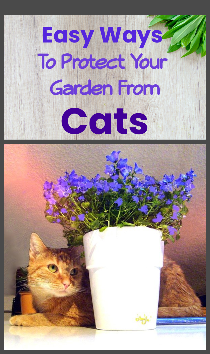 How to Protect Your Garden From Being Destroyed by Cats