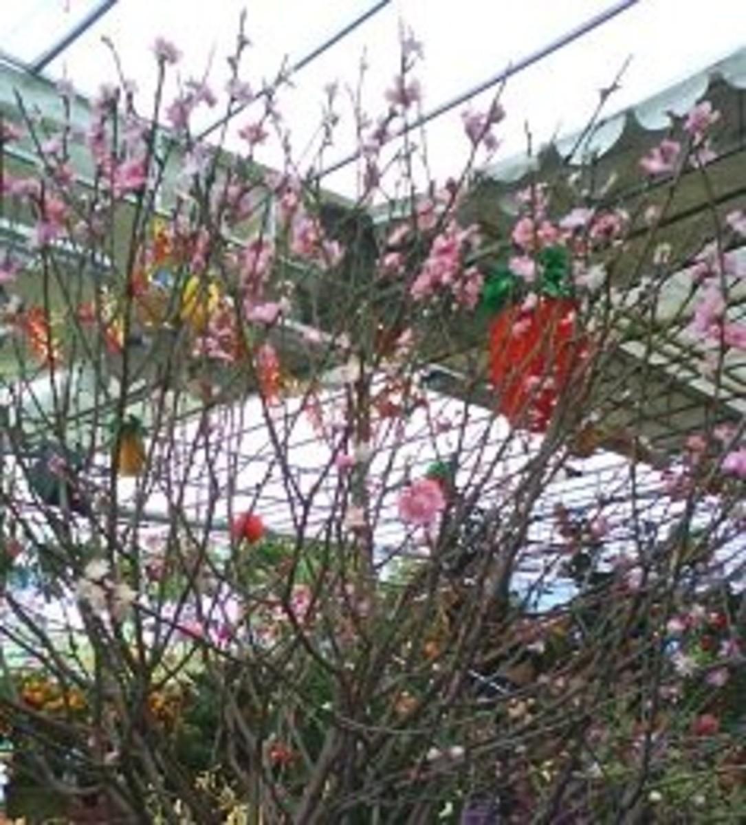 Peach blossom or Tao Hua