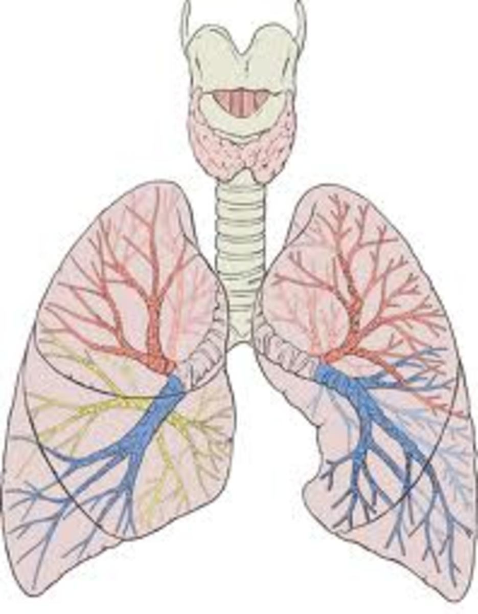 Learn More About The Signs And Symptoms Of Pulmonary Embolism