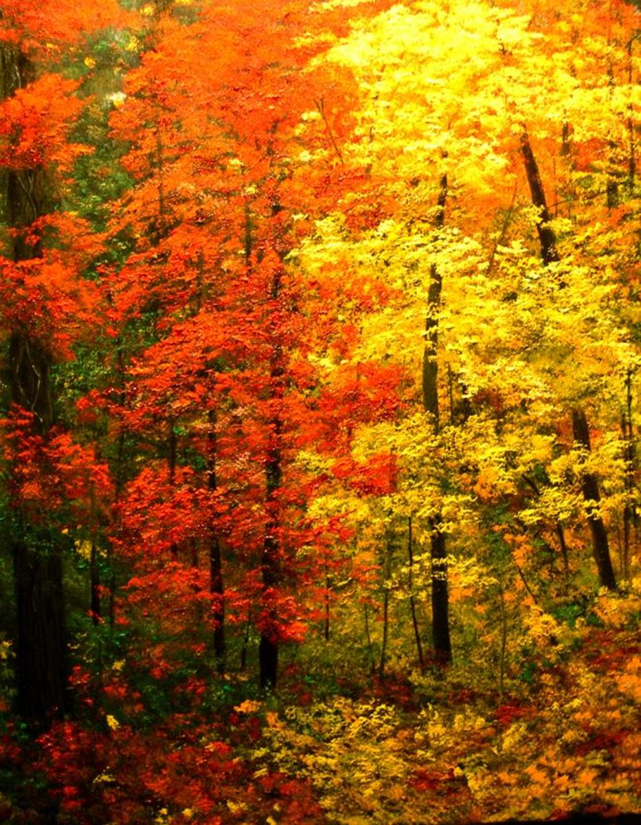 free cross stitch pattern forest in autumn