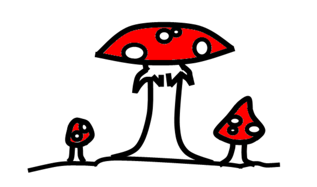 """This common mushroom can grow almost anywhere and is often found near evergreen trees. Many have attempted to experiment with it and failed miserably. Don't make their mistake, stay away! This is the Amanita Muscara a.k.a. Fly Agaric or """"Death Angel"""