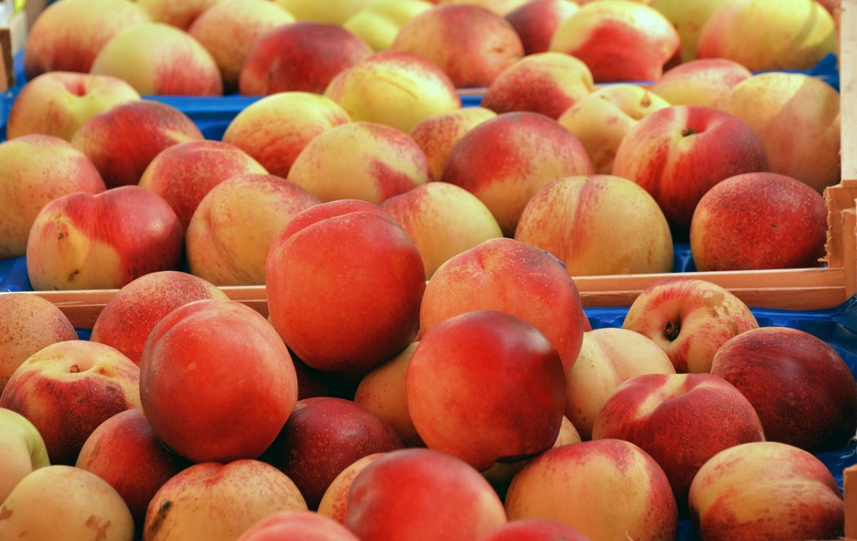 Delicious Recipes for Peaches