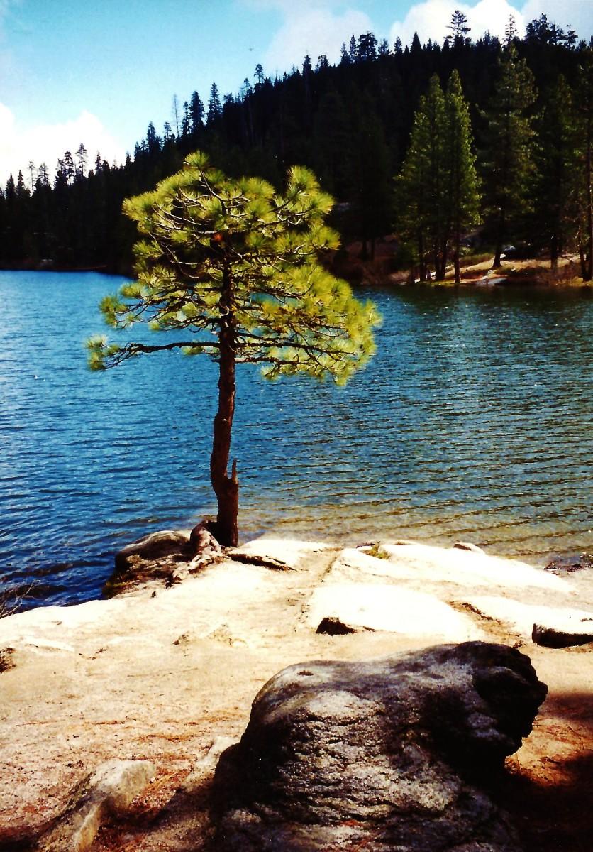 Hume Lake looking pretty in the sun!