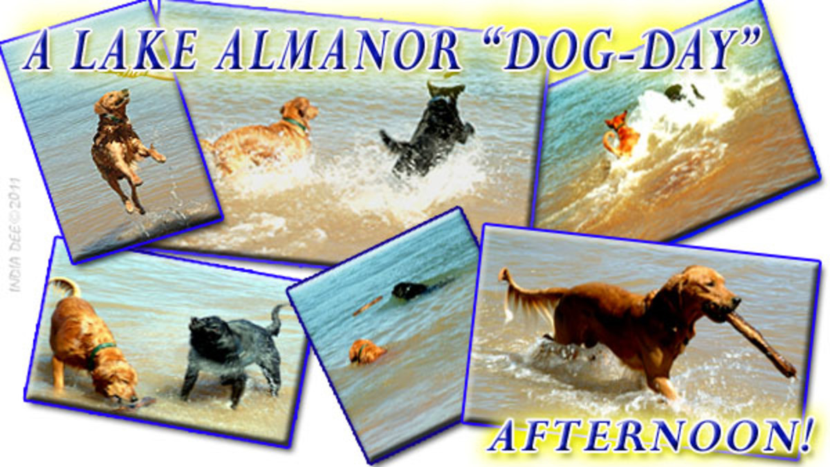 Bringing the dogs along on our Lake Almanor Water Vacation was a blast! They provided loads of fun and action!