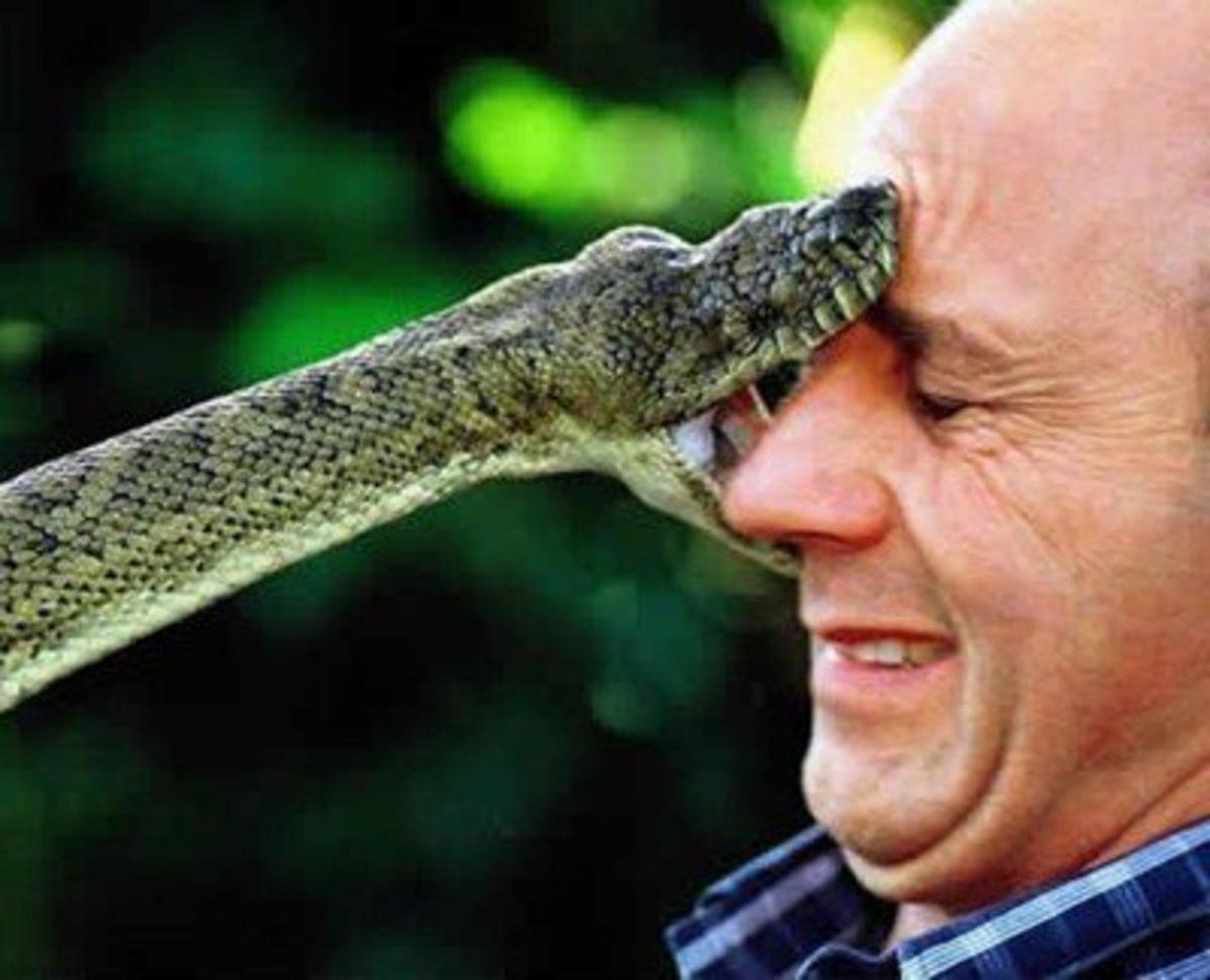 Generic Snake Photo