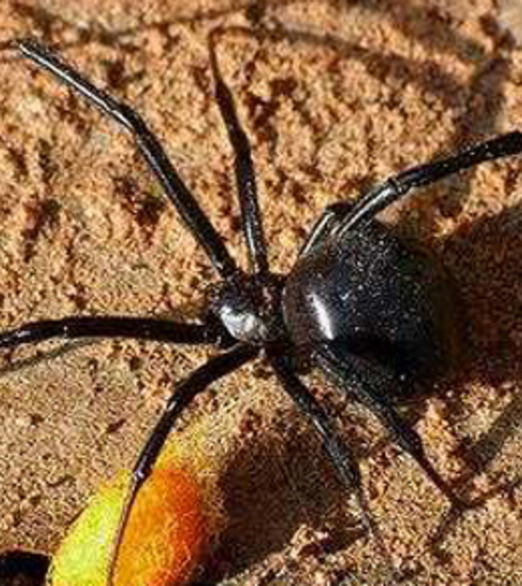 One bite from a poisonous spider can leave you paralyzed for days! And as far as the jungle rule is concern, being immobile makes you a very vulnerable target.