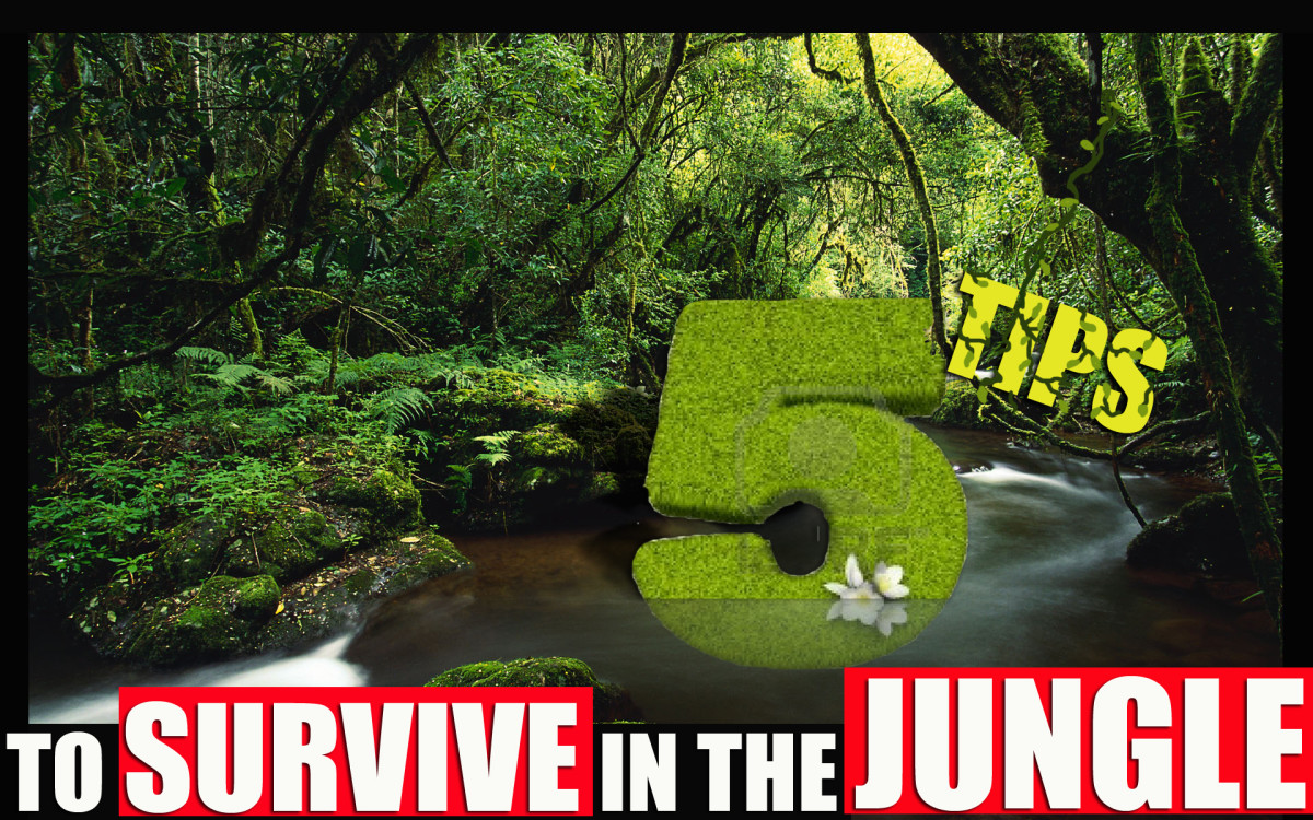 5 Tips on how To Survive in the Jungle