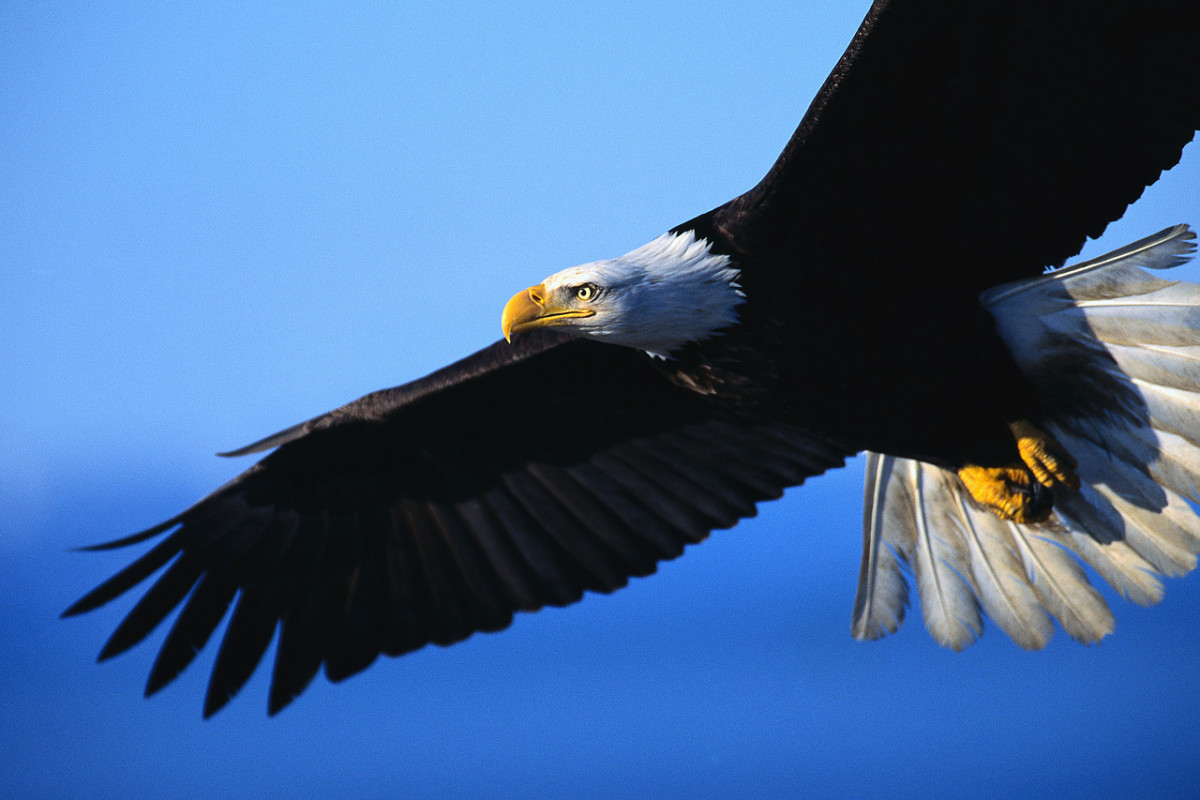 the-eagles-anointing