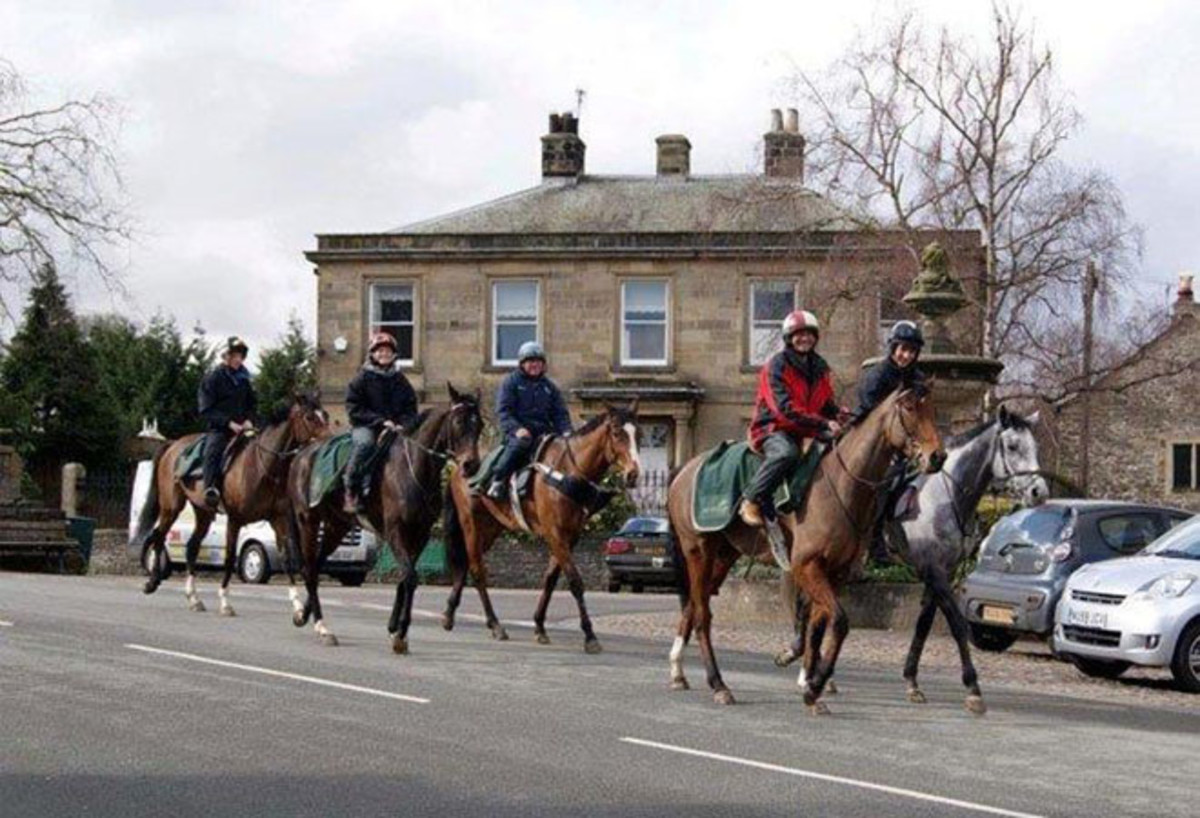 A Mickey Hammond picture of racehorses returning on the Coverdale road from the gallops on the moor