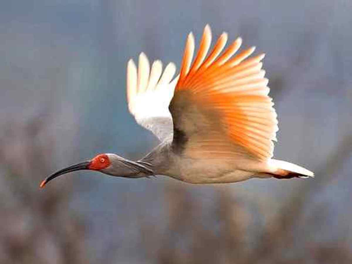 Rare Species Of Birds Rare Animals: T...