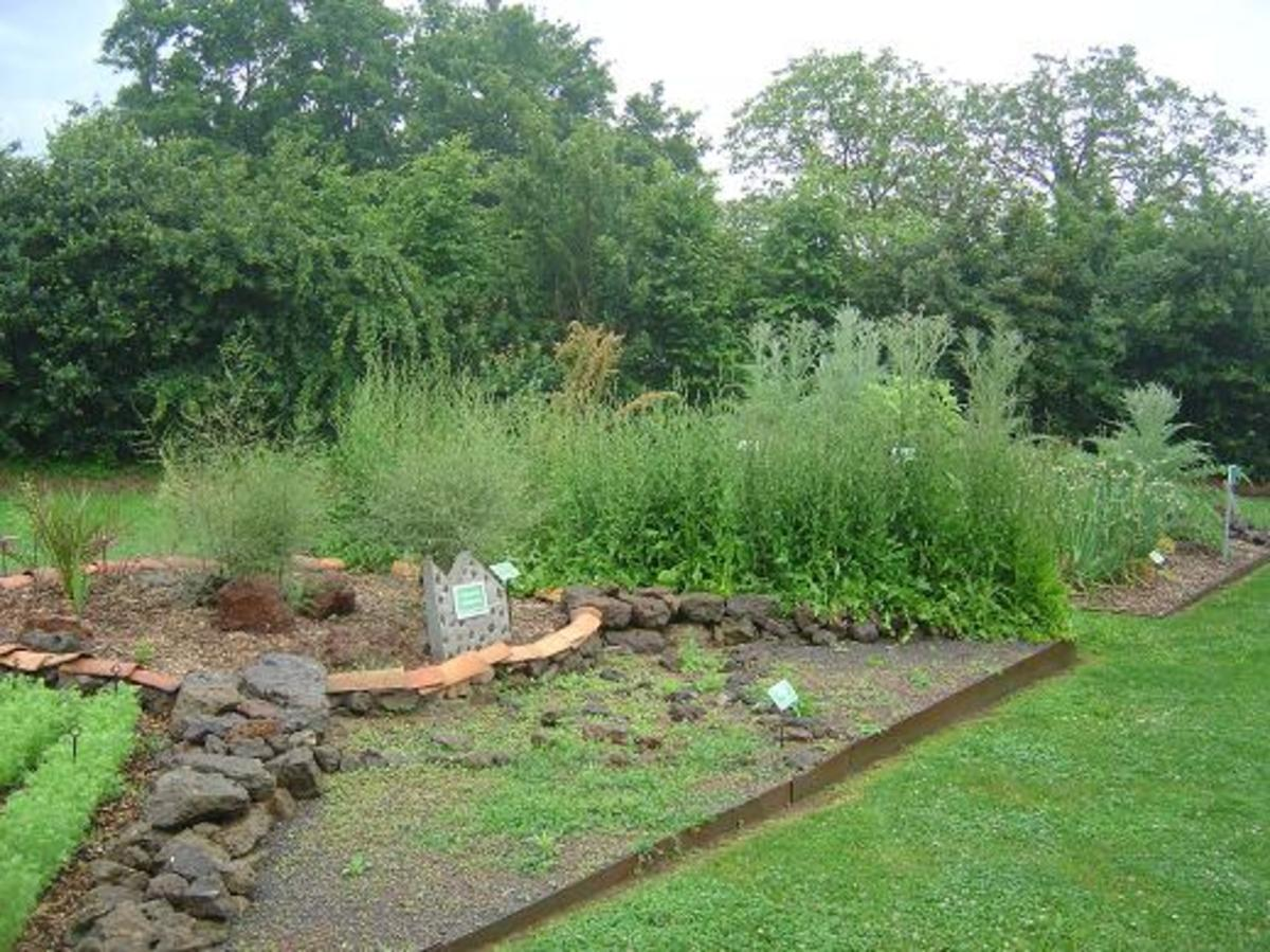 These are the newly created gardens at Cassinomagus featuring a range of plants that the Romans would have cultivated.
