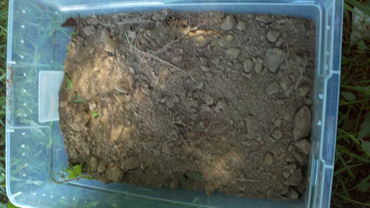 I managed to find dirt in my yard that was relatively rock freee.