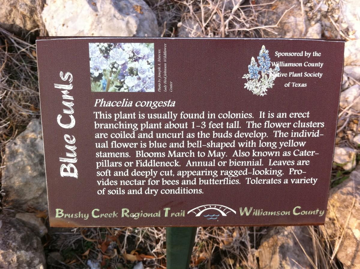 Trail Marker for Blue Curls  - Brushy Creek Sports Park - Cedar Park TX