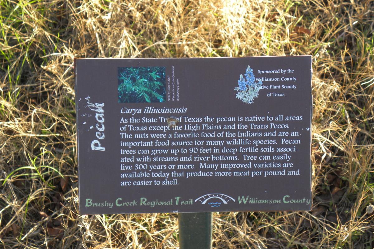 Trail Marker for Pecan Tree  - Brushy Creek Sports Park - Cedar Park TX