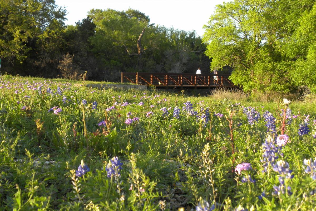Wildflowers  Brushy Creek Park Cedar Park TX