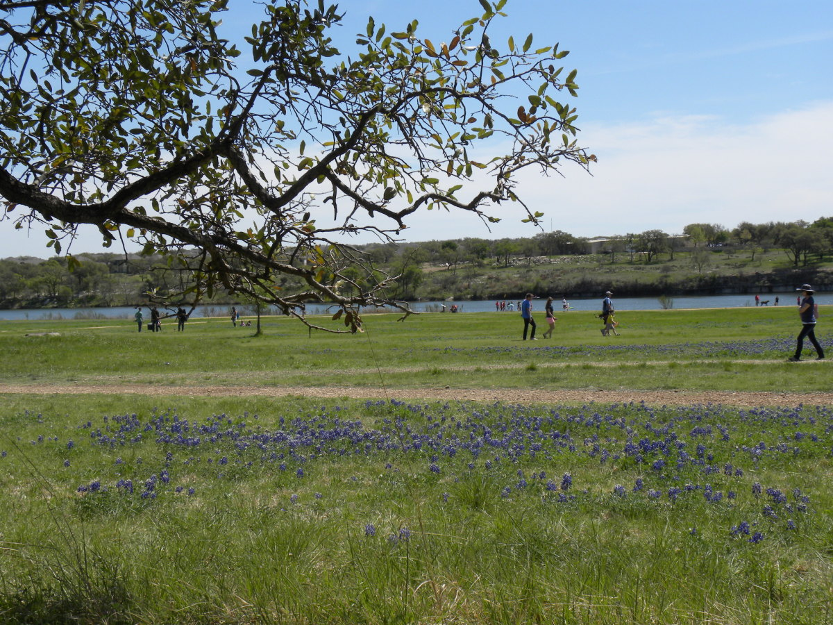 I love to see people taking photos of loved ones in the famous Texas Bluebonnets.  Come see for yourself at Brushy Creek Lake Park Bluebonnet Trail - Cedar Park TX