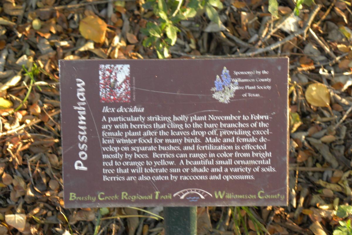 Trail Marker for Holly Plant  - Brushy Creek Sports Park - Cedar Park TX
