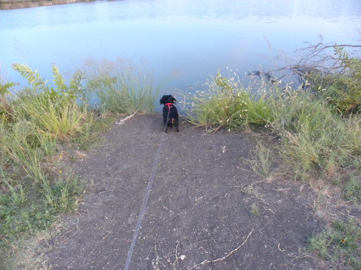 Walking the Dog  Brushy Creek Park Cedar Park TX
