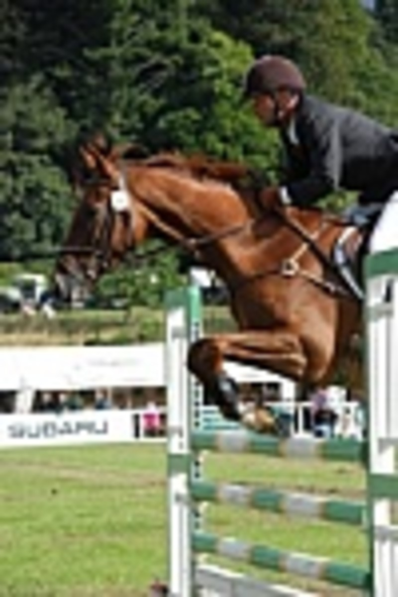 2. Horse Trials- Introvert or Extrovert?