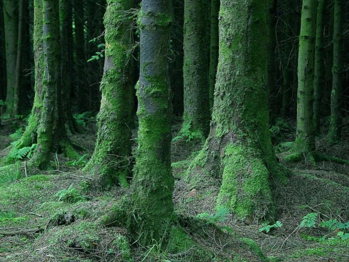 Few places compare to the beauty and the mystery of the Black Forests of northern Pennsylvania.