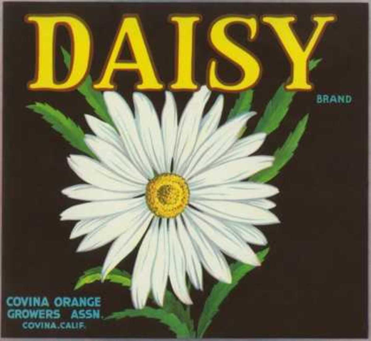 free cross stitch pattern Daisy fruit crate label