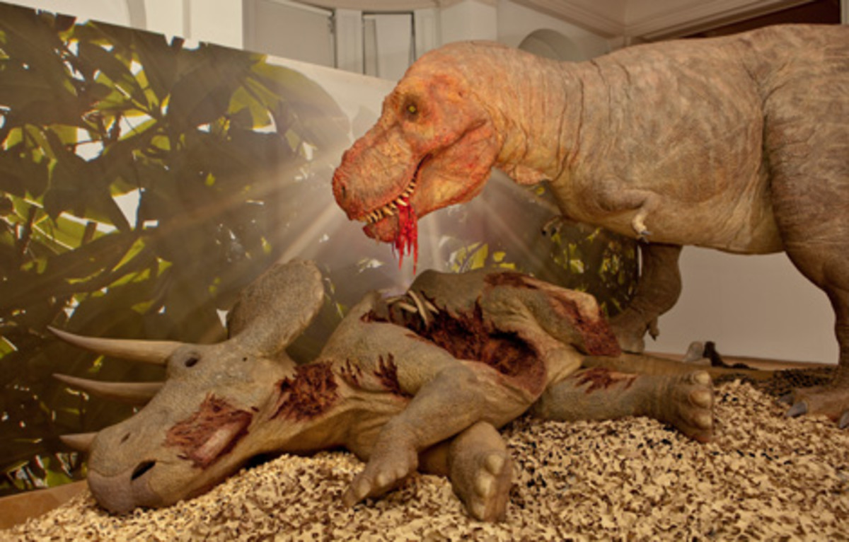T-Rex scavenging Triceratops carcass.