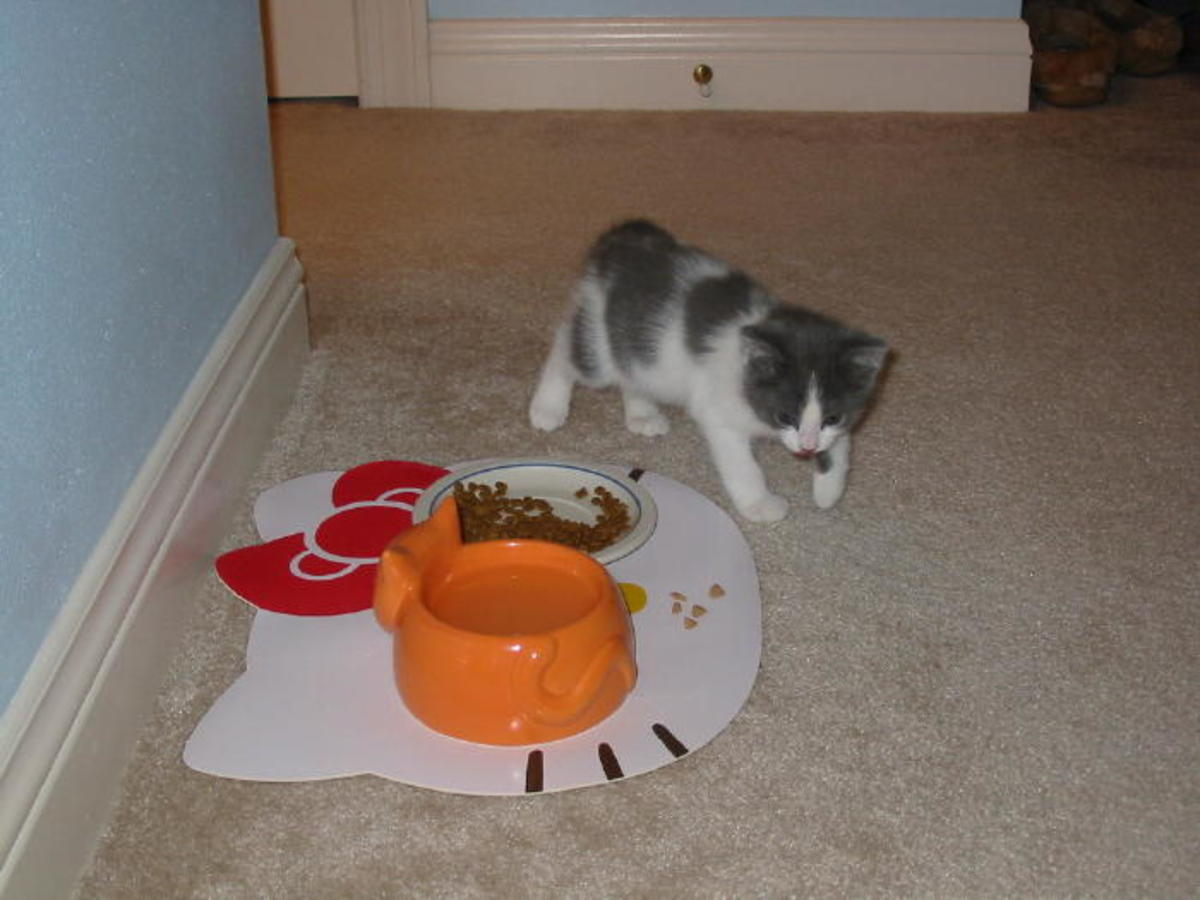 What WAS Mom thinking?? That water dish is bigger than Dixie is!
