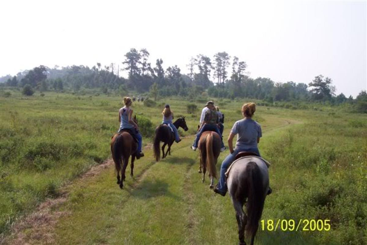 Trail riding at Sane Felasco in Alachua, FL