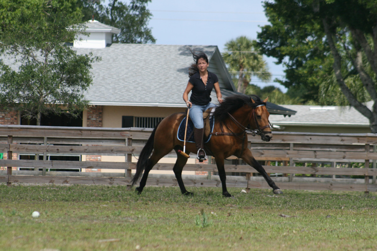 Me & Elvis practicing polo