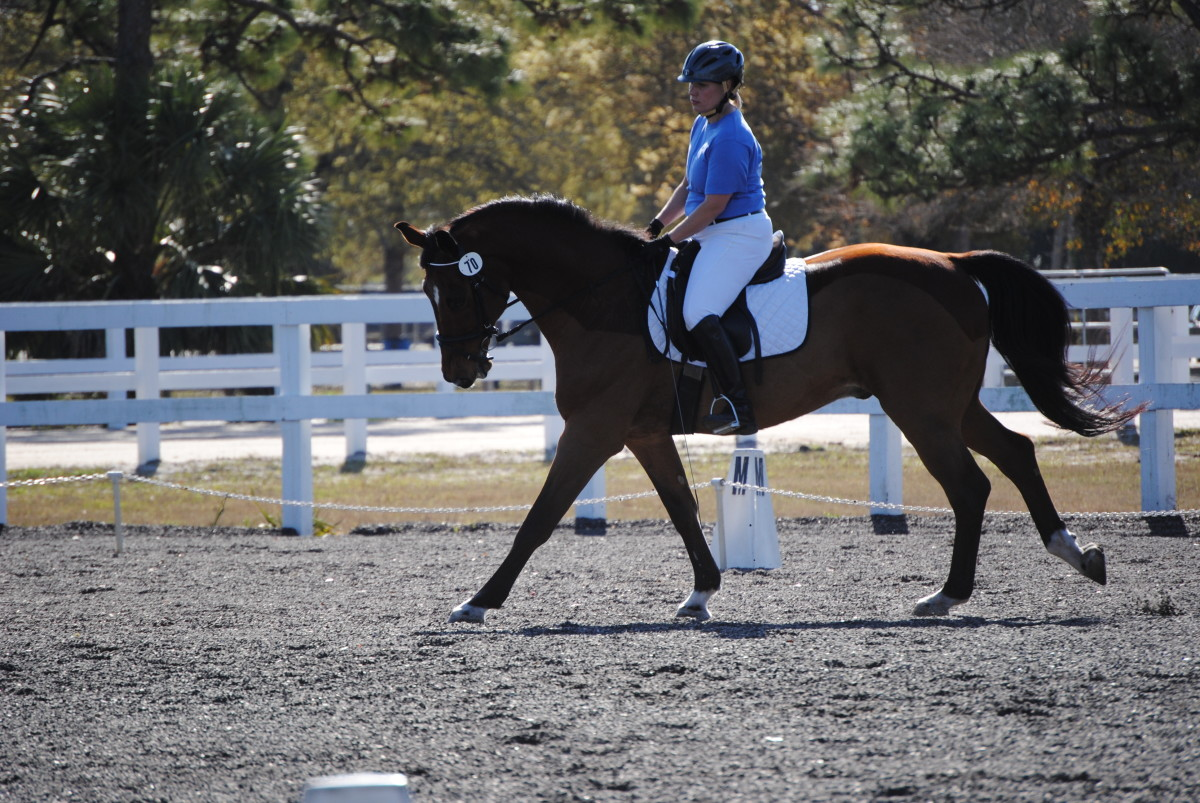 Moriah & Napolean riding a dressage test at Wickham Park in Melbourne, FL