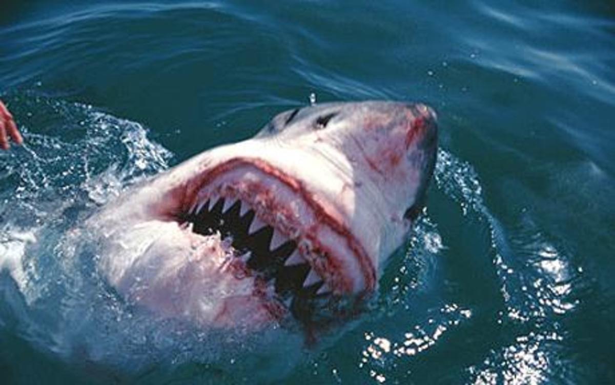 Sharks: Prehistoric Sharks Interesting Info and Pictures