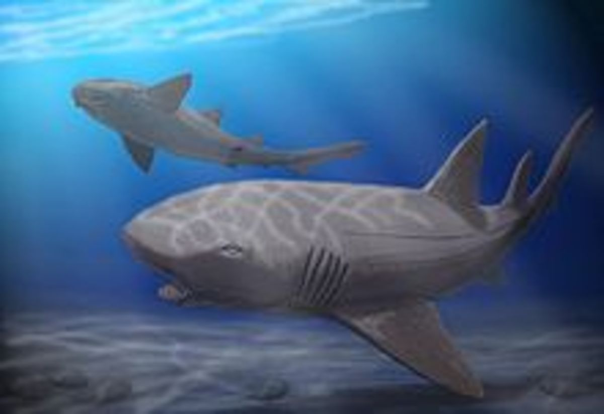 shark-week-prehistoric-sharks-info-and-pictures-megalodon-ptychodus