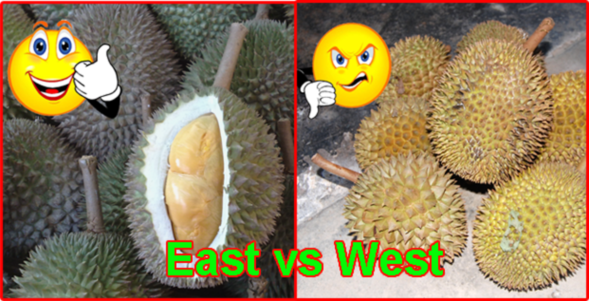 Durian - the most controversial fruit in the world
