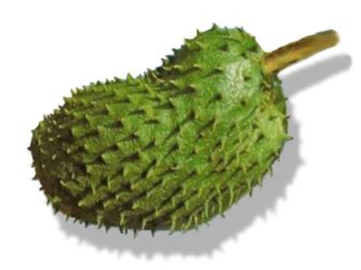 Studies have shown that the Guyabano (Soursop) tree, its fruit, leaves, and bark is a miraculous natural cancer cell killer 10,000 times stronger than chemotherapy.