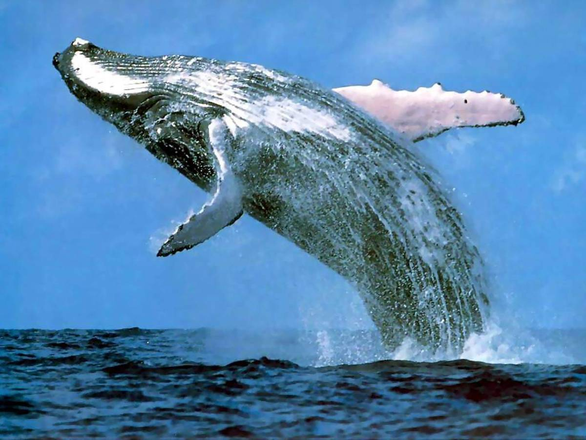 The Awesome Intelligence of Cetaceans (Part 1)