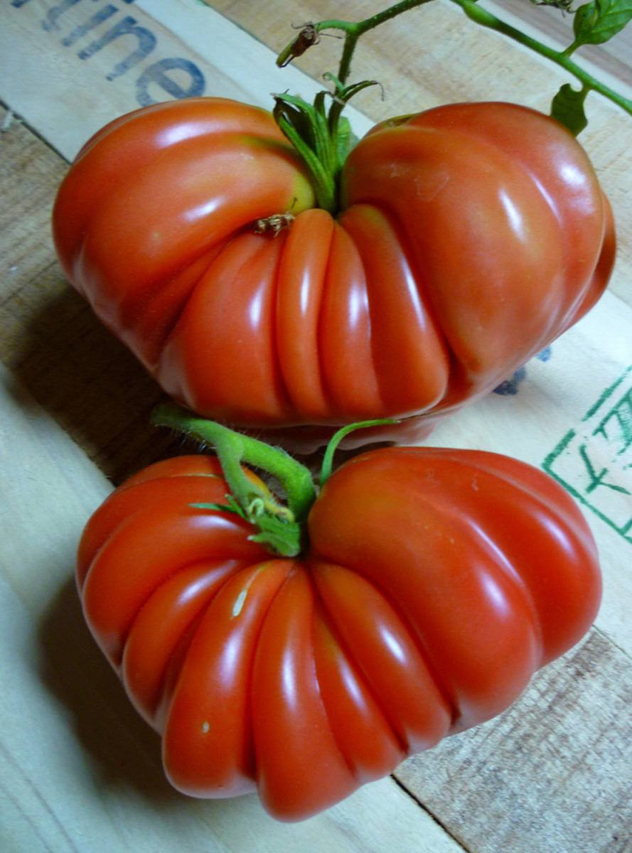 The same bottom two tomatoes, just fully ripened!