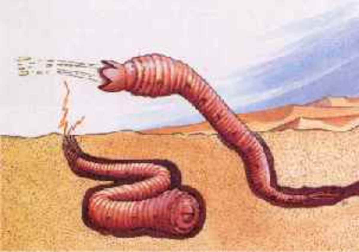 The Mongolian death worm