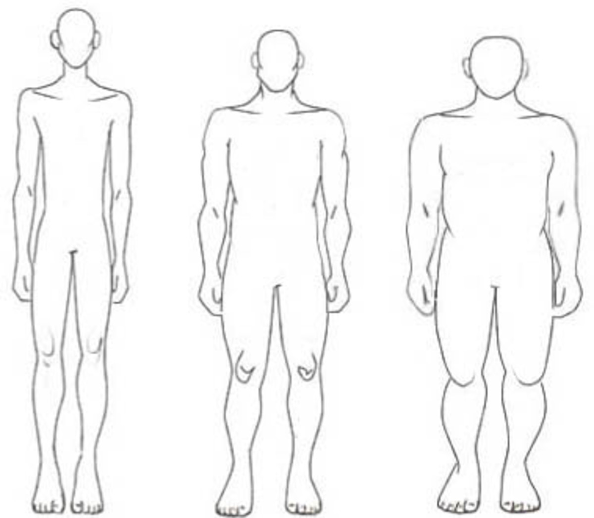 From left to right: Ectomorph, Mesomorph, & Endomorph