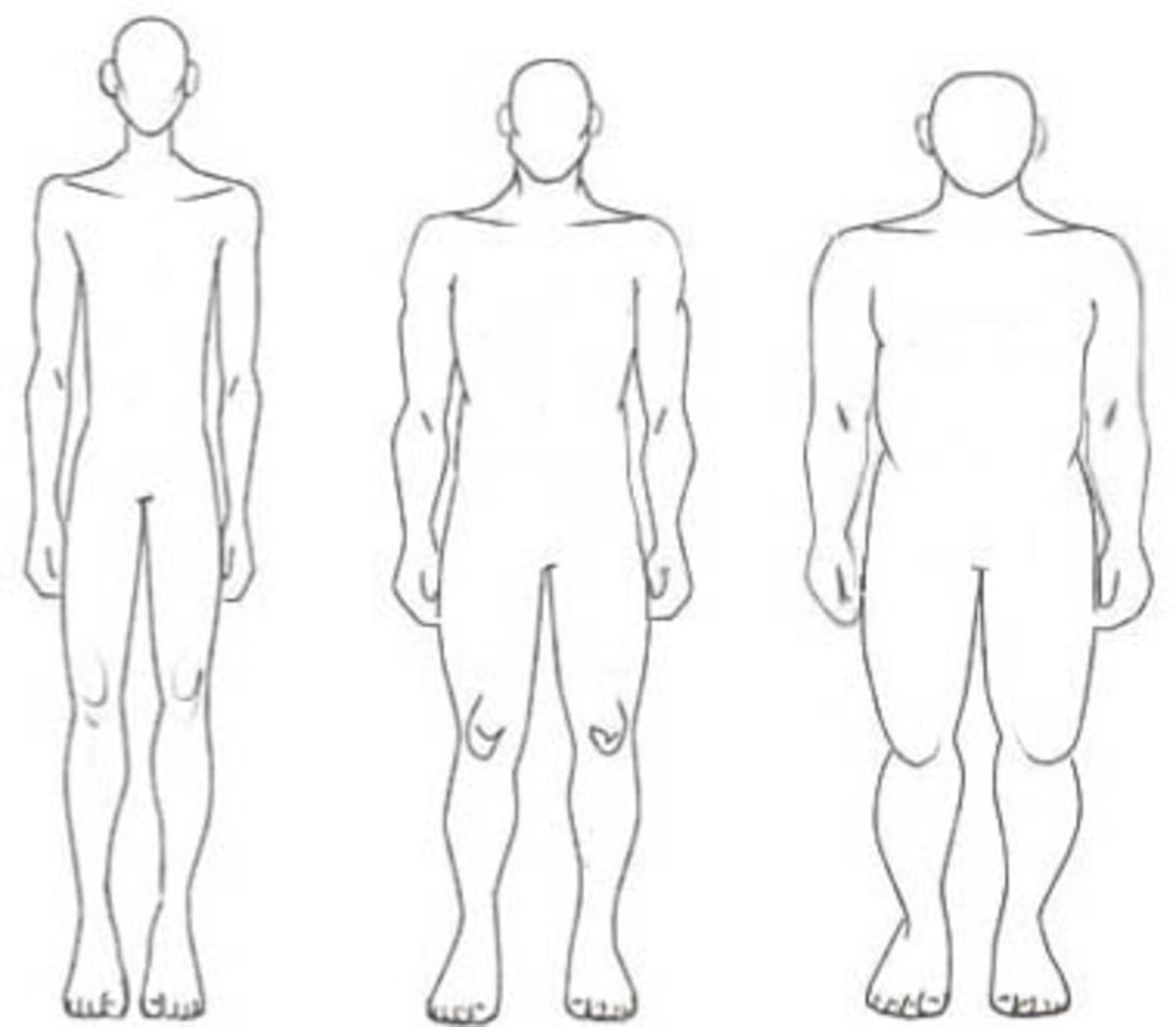 From left to right: Ectomorph, Mesomorph, & Endomorph