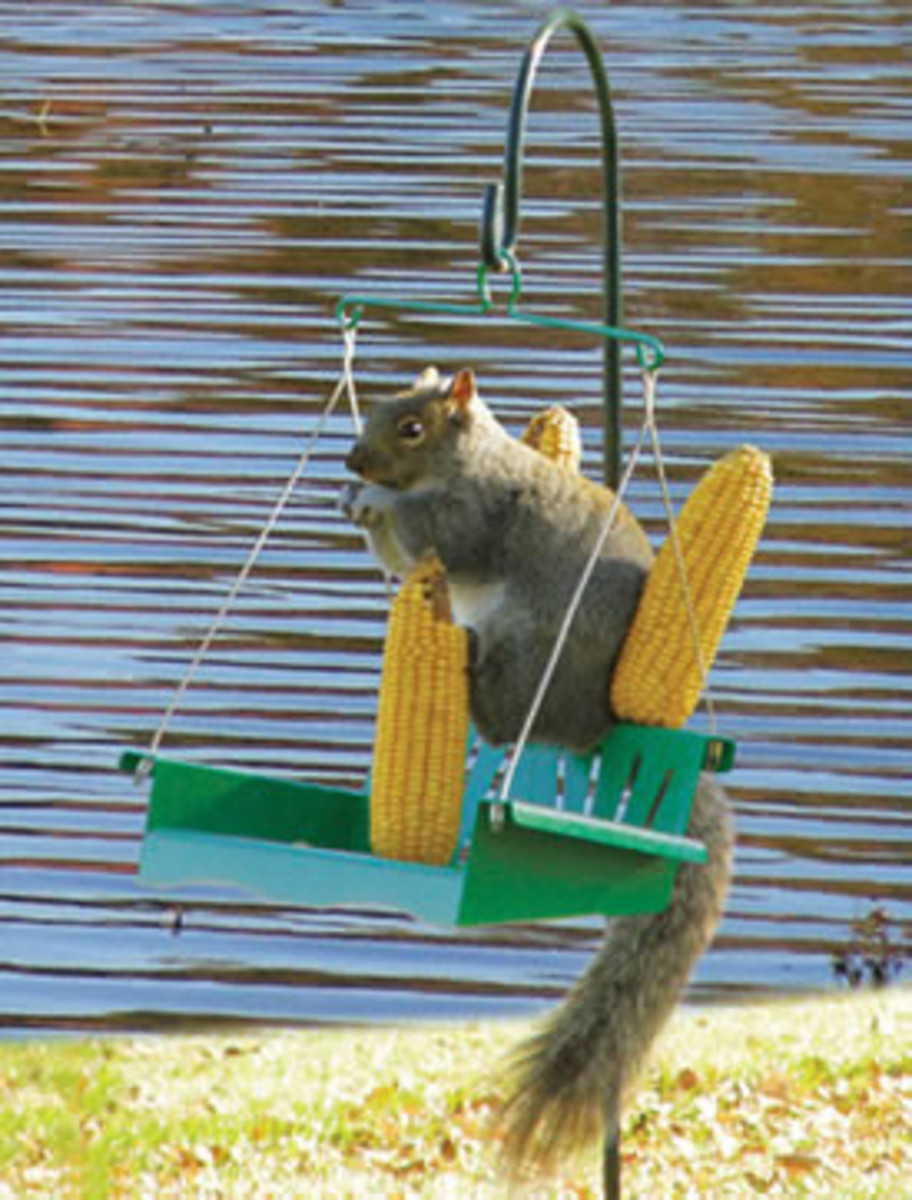Squirrel porch swing with corn cobs