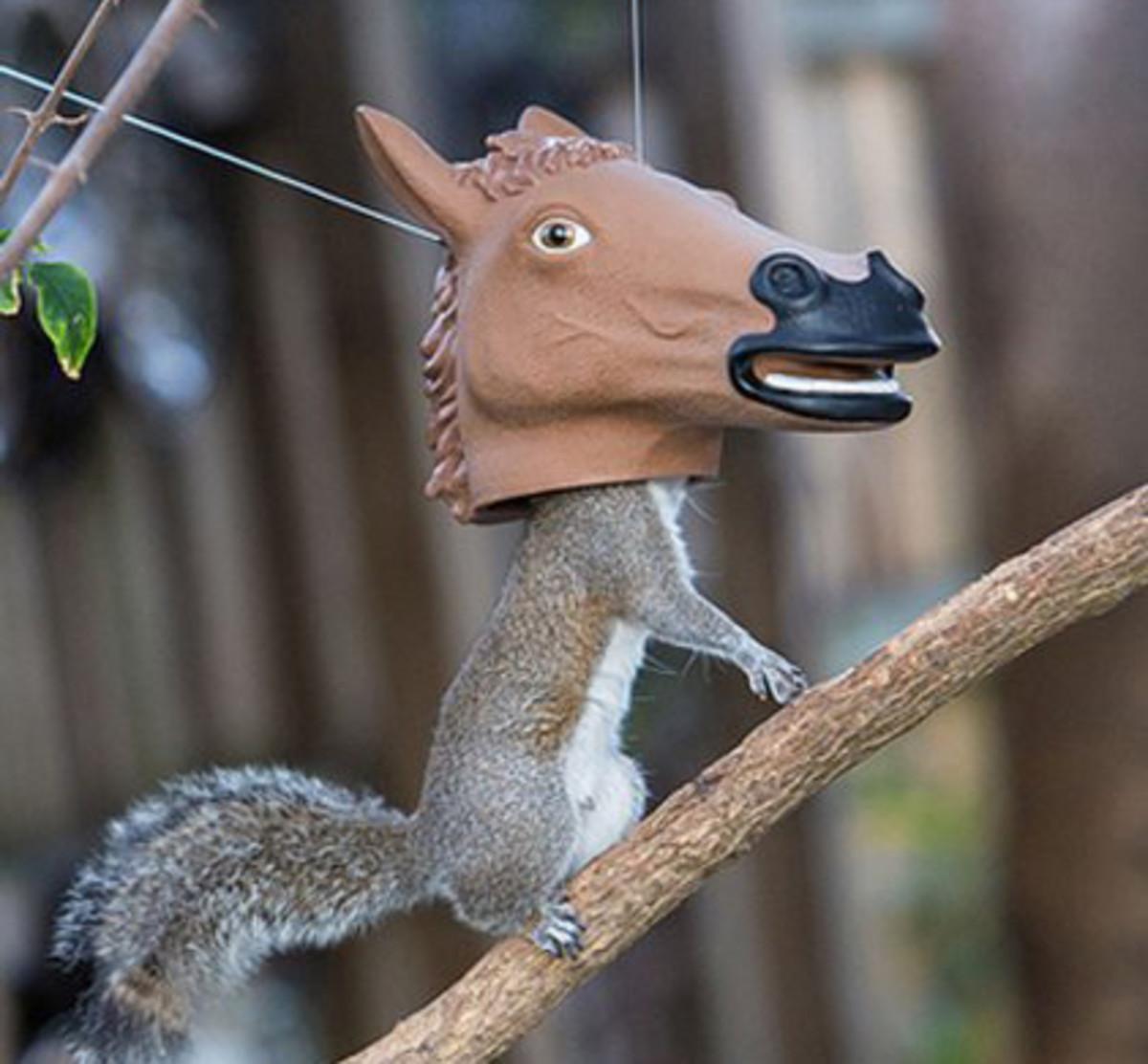 Hilarious horse head squirrel feeder